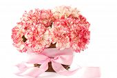 image of gift basket  - Beautiful blooming pink carnations on a white background - JPG