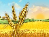 Rural landscape showing a wheat field on a sunny day. Some wheat heads on foreground. Digital illust