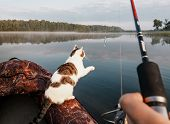 Domestic Cat Enjoys Freedom Outside The House On Fishing With Owners In The Early Morning In Nature. poster