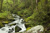stock photo of gatlinburg  - Rushing water in the springtime in the Smoky Mountains - JPG