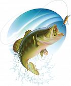 Largemouth bass is catching a bite and jumping in water spray. Raster image. Find editable version i