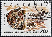 Stamp printed in Tanzania dedicated to Kilimanjaro national park shows leopard