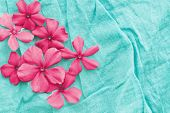 Pink flowers on aqua blue background