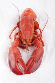 Freshly Boiled Lobster On A White Kitchen Paper