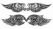 foto of falcons  - Wings symbols - JPG