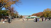 Tokyo - November 22: Visitors Enjoy Cherry Blossom In Ueno Park