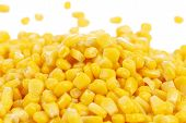 pic of corn-silk  - Tasty yellow grains of corn - JPG