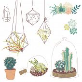 foto of terrarium  - Vector set with succulents - JPG
