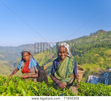 Two tea pickers smile as