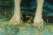 picture of fish skin  - Fish Spa for the foot Skin Therapy - JPG