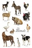 stock photo of herbivore animal  - Educational poster with farm animal in English - JPG