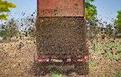 foto of tractor trailer  - Tractor with trailer fertilizing field with natural manure - JPG