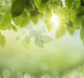 foto of photosynthesis  - Spring or summer season abstract nature background with grass and blue sky in the back  - JPG