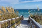 stock photo of sea oats  - Sandy boardwalk path to a snow white beach on the Gulf of Mexico with ripe sea oats in the dunes - JPG