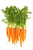 pic of carrot  - fresh carrots with green leaves isolated on white background - JPG