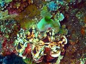 picture of enormous  - The surprising underwater world of the Bali basin - JPG