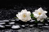 foto of gardenia  - Still life with two gardenia with candle on black pebbles  - JPG