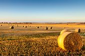 pic of farm land  - Freshly cropped farm land hay bales on a sunset
