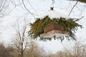 picture of conifers  - bird feeder hanging from a tree - JPG