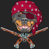 foto of pistols  - Vector Dog Rottweiler Pirate with pistols - JPG