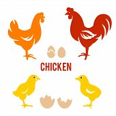 foto of roosters  - Vector Illustration of Rooster - JPG