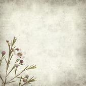 picture of small-flower  - textured old paper background with small pink flowers of waxflower - JPG