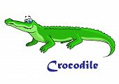 foto of crocodile  - Colorful green cartoon crocodile character with text Crocodile below - JPG