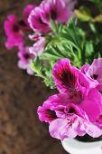 image of geranium  - bright beautiful geranium flowers on cork background - JPG