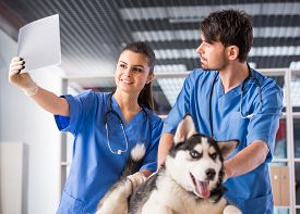 picture of working-dogs  - Vet doctors with dog are scrutinizing dog - JPG