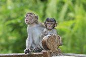 stock photo of baby-monkey  - Cute baby monkeys - JPG