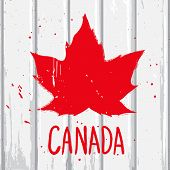 foto of canada maple leaf  - Red maple Canadian leaf on the white wood wall vector graffiti illustration in grunge style - JPG