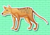 stock photo of cute tiger  - Closeup cute tasmanian tiger on green background - JPG