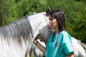 foto of veterinary  - Veterinary great performing a scan to a young mare - JPG