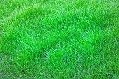 picture of grass area  - A green grass texture background - JPG