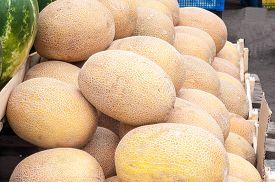 image of cucurbitaceous  - Melon or Cucumis melo plant family Cucurbitaceae cucurbitaceous culture - JPG