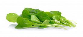 picture of turnip greens  - fresh green turnip on the white background - JPG