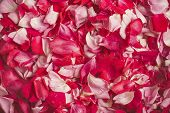Love Rose Petals, Concept Of Valentine Day, Wedding Day, Sweet Love. Red And Pink Roses Background.  poster