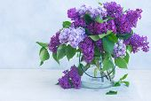 Lilac Blooming Bunch In Vase On Gray Background poster