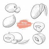 Mango Handdrawn Vector Sketch.natural Vegeterian Food Set. poster