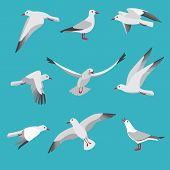 Atlantic Seagull In Different Action Poses. Cartoon Flying Birds Seagull Posing, Wildlife Mascot Cha poster