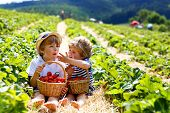 Two Little Sibling Kids Boys Having Fun On Strawberry Farm In Summer. Children, Cute Twins Eating He poster