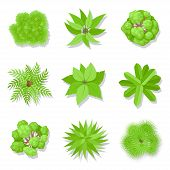 Trees Top View. Green Woody Plants Set With Branches And Leaves, Botany And Ecology Concept. Vector  poster