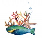 Watercolor Nautical Border With Parrotfish. Hand Painted Underwater Illustration With Parrotfish, St poster