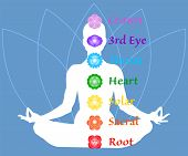 The Seven Chakra Names Map. Famale Body In Lotus Yoga Asana On Blue Petals Background. Root, Sacral, poster