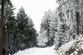 Winter Nature. Winter Forest Landscape In Early Winter Morning. Winter Nature View With Snowy Winter poster