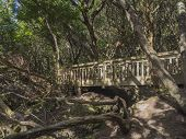 Wooden Bridge On Footpath Sendero De Los Sentidos Path Od The Senses In Mystery Primary Laurel Fores poster