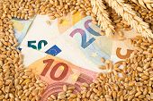 Euro Banknotes Covered With Heap Of Wheat Kernels With Wheat Ears - Wheat Cost Or Prize Concept, Sel poster