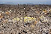 Landscape Image Of An Old Lava Flow From Lava Butte In Oregon Filled With Barren Rocks That Is Gradu poster