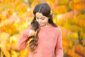 First Signs Of Autumn. Small Child Wear Autumn Leaves In Hair. Autumn Beauty. Give Your Hair A Seaso poster
