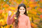 Fall Is Great Fun. Happy Little Child Enjoy Fall Season. Small Girl Play On Fresh Air On Sunny Fall  poster